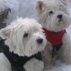 Foto's van leuke honden dragen Puffy Coats