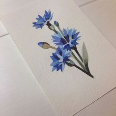 #cornflower #watercolor #sashaunisex #cornflowertattoo