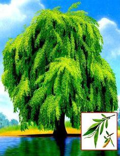 Autumn Nature, Montessori Materials, Elementary Science, Plantar, Nature Crafts, Autumn Theme, Card Games, Clip Art, Activities