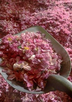 Shovel full of pink petals!
