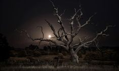 Enchanted forests: British woods and moors at night – in pictures | Art and design | The Guardian Twilight, Aberdeen Art Gallery, One Step Beyond, Goldfish Bowl, Still Life Images, Fear Of The Unknown, Danse Macabre, Chiaroscuro, The Guardian