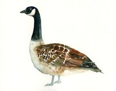 CANADA GOOSE by DIMDI Original watercolor painting 10x8 by dimdi, $25.00