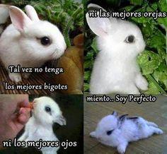 conejo tierno con frase graciosa para compartir con tus amigos