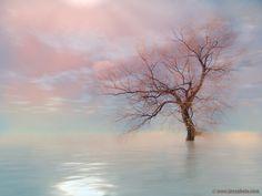 Photo: Tree and infinite   http://jossphoto.com/nature-outdoor_21.htm