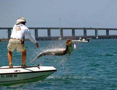 Tarpon fishing Florida Keys  #pocketranger #trophycasehuntingandfishing
