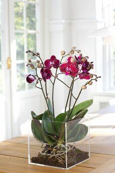 une jolie orchidée violette d'interieur