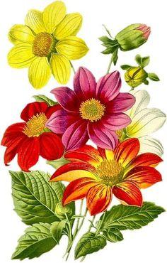 "Photo from album ""Art Flowers"" on Yandex. Art Floral, Beautiful Flowers Wallpapers, Botanical Flowers, Flower Wallpaper, Fabric Painting, Vintage Flowers, Clipart, Watercolor Flowers, Flower Patterns"