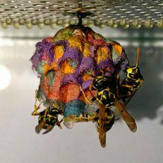 軒先などで見つけてしまうと思わず「ギャー!」と叫びたくなってしまう、スズメバチの巣。出来れば出会いたくないものですが、もしスズメバチの巣がこんな風にカラフルだったらどうでしょうか?ヨーロッパアシナガバチ(European paper wasps)を使った実験により、今までに見た事がないようなこんなカ