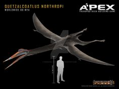 Quetzalcoatlus fossils from the Cretaceous period have been found in present day Mexico.