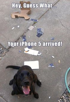 Funny Dog iPhone Arrived Picture