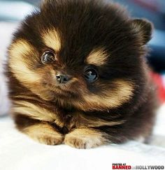 there has to be some thing wrong with being this freakin! cute