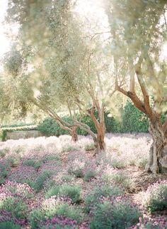 Venue: San Ysidro Ranch Laura Nelson Photography | Destination Wedding Photography