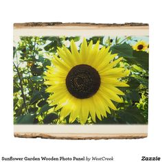 Sunflower Garden Wooden Photo Panel