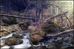 Old forest by Lazarescu R. Catalin on Waterfall, River, Nature, Outdoor, Beautiful, Outdoors, Naturaleza, Waterfalls, Outdoor Games
