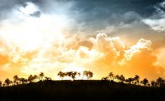 Sunset over palms HD Wallpaper