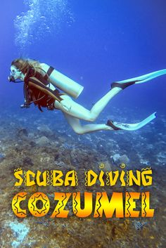 Cozumel is well-known in the scuba diving industry as one of the best diving locations in the world. With an array of sea life and a breathtaking reef system, it's a scuba diver's dream. Scuba Diving Quotes, Scuba Diving Courses, Scuba Diving Equipment, Best Scuba Diving, Scuba Diving Gear, Cave Diving, Cozumel Diving, Women's Diving, Diving School