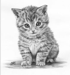 Another Kitten Drawing Amazing Drawings, Cool Drawings, Kitten Drawing, Realistic Animal Drawings, Lapin Art, Pencil Art, Animal Pencil Drawings, Colour Pencil Drawing, Drawing Animals