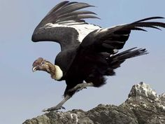 Cañon del Condor - Cusco - Blog de Inca World Perú