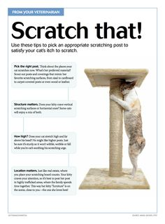 #Tips to picking the perfect #cat #scratching #post. #pets