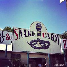 Snake Farm New Braunfels, Texas