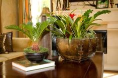 Google Image Result for http://www.guide-to-houseplants.com/image-files/exotic-house-plants.jpg