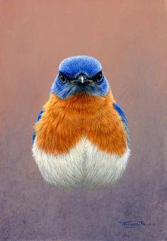 bluebird by Jeremy Paul