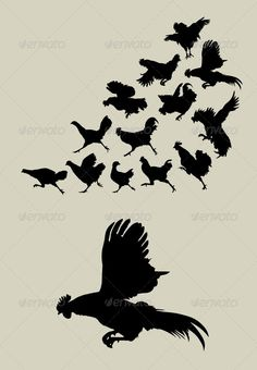 Chicken or Rooster Running Silhouettes #GraphicRiver