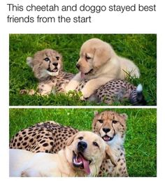 33 Cute Dog Posts That Will Have You Grinning All Day art breeds cutest funny training bilder lustig welpen Baby Animals Pictures, Cute Animal Pictures, Animals And Pets, Cute Pics, Smiling Animals, Happy Animals, Funny Animal Jokes, Cute Funny Animals, Adorable Baby Animals