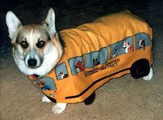 Corgi or Bus?