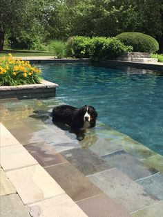 My pool boy Swimming Pool Fountains, Swimming Pool Designs, Swimming Pools, Kiddie Pool, My Pool, Pretty Beach House, Courtyard Pool, Built In Bbq, Building A Pool