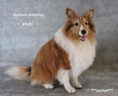 Needle Felted Shetland Sheepdog by YaYaYa.  ちびメイ1.  Amazing!  I thought this was a real doggie!