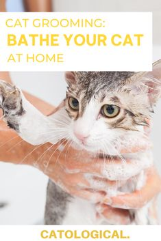 Quarantine has made it difficult to make sure your feline friend get the well deserved bath they deserve. Give them pet salon quality baths right from home with these tips! #CatGrooming #CatCare #KittenCare #CatCareAtHome #CatDIY #CatTips Baby Kittens, Cats And Kittens, Kitten Breeds, Wild Animals Pictures, Cat Ages, Kitten Care, Cat Care Tips, Cat Grooming, Cute Funny Animals