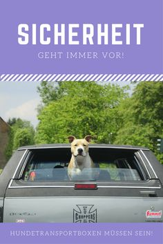 hundebox sicher mobil mit hund auch im cabrio. Black Bedroom Furniture Sets. Home Design Ideas