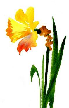 Daffodil, watercolor by Kim Attwooll