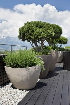 Dachterrasse VADUZ You are in the right place about mansard roof Here we offer you the most beautiful pictures about the steel roof you are looking for. When you examine the Dachterrasse VADUZ part of Indoor Planters, Garden Planters, Roof Garden Plants, Back Gardens, Outdoor Gardens, Roof Gardens, Minimalist Garden, Small Garden Design, Terrace Garden
