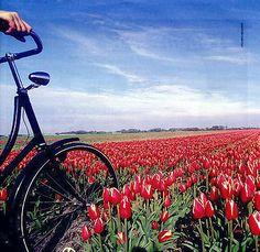 Google Afbeeldingen resultaat voor http://www.goatlantaandbeyond.com/Cycling_in_Holland_1_1274351349.jpg