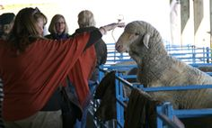 NYS Sheep & Wool Festival in Rhinebeck, NY Oct. 20-22    NYS Sheep & Wool Fest you can Look for Bijou Basin Ranch in Building C, Booths 13 & 14!