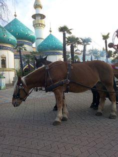 Cavallo a gardaland