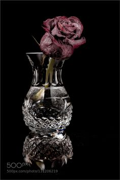The Last Rose - Pinned by Mak Khalaf Dead rose in a cut crystal bud vase with reflection on a black background. Fine Art vasecrystaldarkdeaddryflowerredreflectionrose by jimc31415