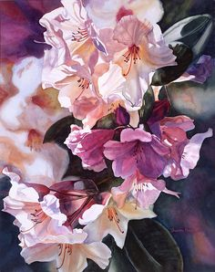 Creamy Rhododendron by Sharon Freeman - Creamy Rhododendron Painting - Creamy Rhododendron Fine Art Prints and Posters for Sale