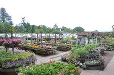 Smeaton Nursery Gardens - Home Page