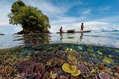 Le dernier paradis de la vie aquatique se trouve autour de l'île de Nouvelle-Bretagne, en Papouasie-Nouvelle-Guinée - National Geographic France