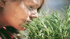 Health, Garden, Plants, Garten, Health Care, Lawn And Garden, Gardens, Plant, Gardening