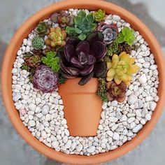 Decoration trend: Small colorful DIY succulent flower pot in a top .- Deko-Trend: Kleiner bunter DIY-Sukkulenten-Blumentopf im Topf Decoration trend: Small colorful DIY succulent flower pot in a pot pot colorful - Succulent Arrangements, Cacti And Succulents, Planting Succulents, Planting Flowers, Succulents In Containers, Cactus Plants, Succulent Gardening, Succulent Terrarium, Organic Gardening