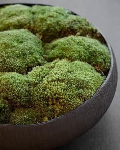 Detail of the moss table display from the previous post, made by one of our designers Indoor Garden, Indoor Plants, Outdoor Gardens, Laura Hammett, Moss Centerpieces, Moss Decor, Moss Plant, Plant Table, Moss Garden