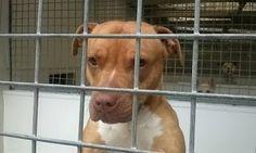 """""""O Grito do Bicho"""": Polícia mantém cadela numa jaula dois anos - Ingla..."""