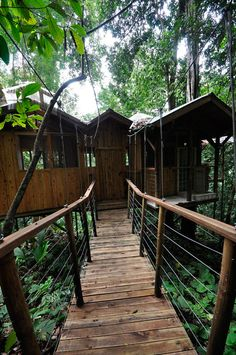 treehouse resort in costa rica finca bellavista (18)