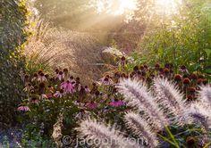 Græsserne med duskene er Calamagrostis brachytrica også kaldet Diamantgræs eller Koreansk Havesandrør.  Den høje græs er Molinia 'Transparent' også kaldet Stor Pibegræs eller Blåtop.  Derudover er der Pennisetum 'Red Head' - Lampepudsergræs.    Pileurten er en kertepileurt - Persicaria amplexicaulis 'Summer Dance'.  Purpursolhatten er Echinacea 'Summer Sky'
