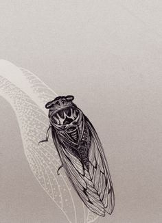 Forms by Mira. Via Behance // good lines //  They (Cicadas) are everywhere now!