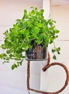 { HAGESTUEN } Herbs, Herb